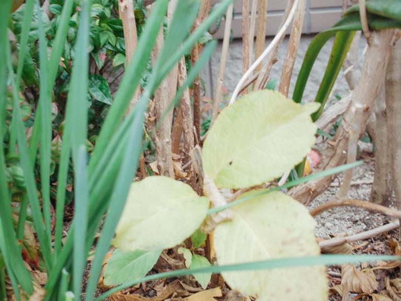 0107blog 6 - ヒカリカメラ